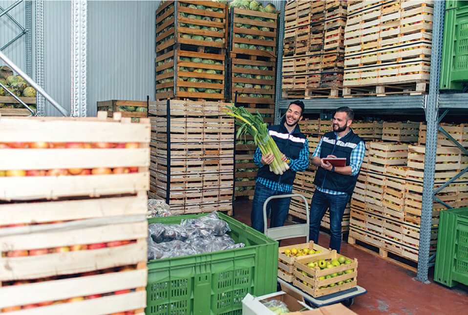 two men in the agricultural industry sorting through fresh produce